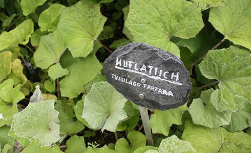 Hildegard forum der kreuzschwestern bingen le jardin d 39 herbes m dicinales selon hildegarde de for Jardin hildegarde